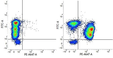 Mouse IgG1 Negative Control Antibody (Human) thumbnail image 14