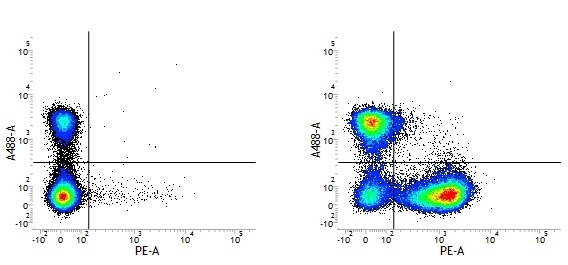 Rat IgG1 Negative Control Antibody - HRP thumbnail image 1