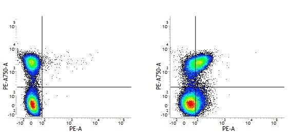 Rat IgG1 Negative Control Antibody - HRP thumbnail image 2