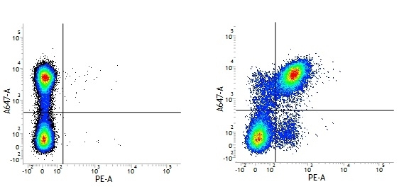 Rat IgG2a Neg Cont Antibody :Alexa Fluor 405 thumbnail image 1