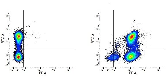 Rat IgG2a Neg Cont Antibody :Alexa Fluor 405 thumbnail image 3