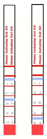 Mouse Monoclonal Antibody Isotyping Test Kit thumbnail image 1