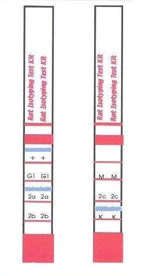 Rat Monoclonal Antibody Isotyping Test Kit thumbnail image 1