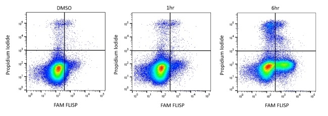 FLISP™ FAM-Leu-CMK Serine Protease Assay Kit gallery image 1