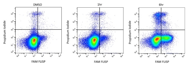 FLISP™ FAM-Phe-DAP Serine Protease Assay Kit gallery image 1