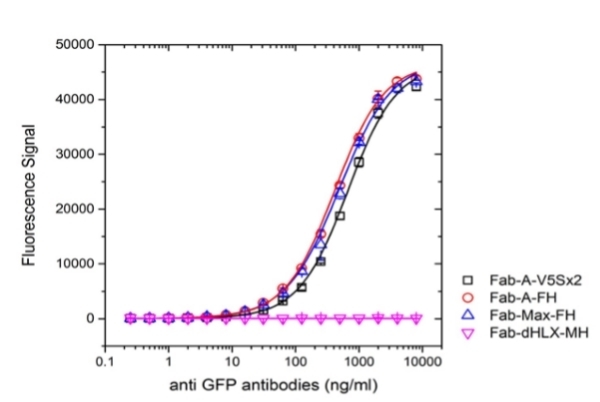 Anti Bacterial Alkaline Phosphatase Antibody, clone AbD25296_hIgG2 thumbnail image 3