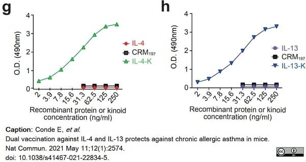 Anti Diphtheria Toxin Antibody, clone 8G1 gallery image 1