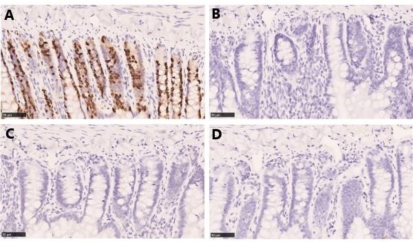 Anti BrdU Antibody, clone AbD33761kg thumbnail image 3