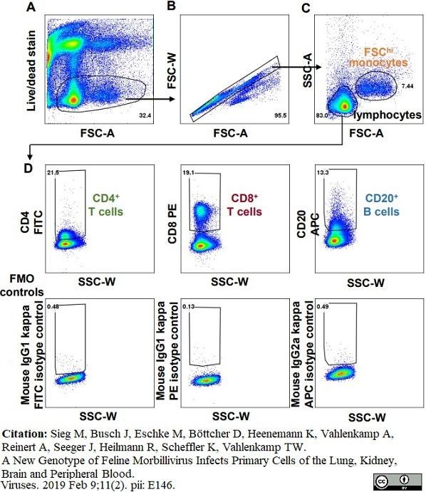 Anti Cat CD4 Antibody, clone vpg34 thumbnail image 5