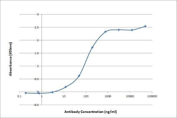Anti CAT IgG/A/M Antibody, clone K185 4D4 thumbnail image 2