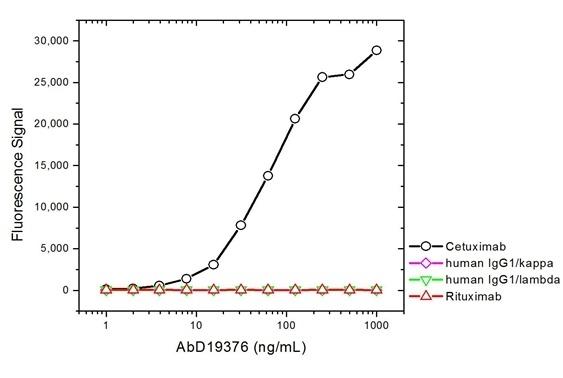 Anti Cetuximab Antibody, clone AbD19376_hIgG1 thumbnail image 2