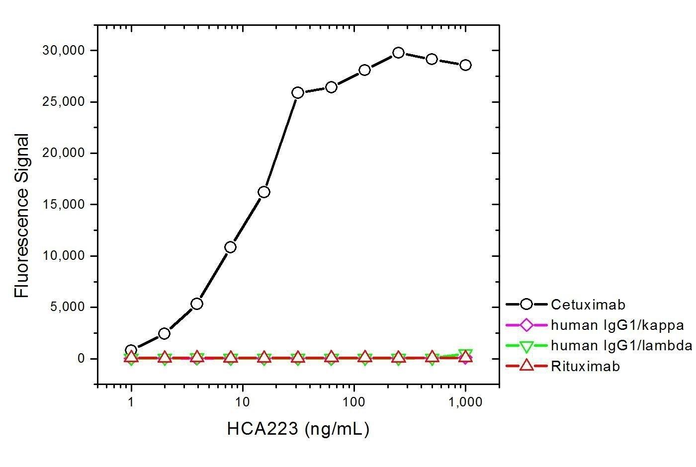 Anti Cetuximab Antibody, clone AbD19815_hIgG1 thumbnail image 3