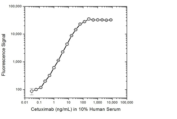 Anti Cetuximab Antibody, clone AbD19834 gallery image 4