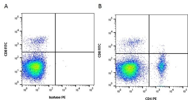 Anti Chicken CD4 Antibody, clone 2-35 thumbnail image 3