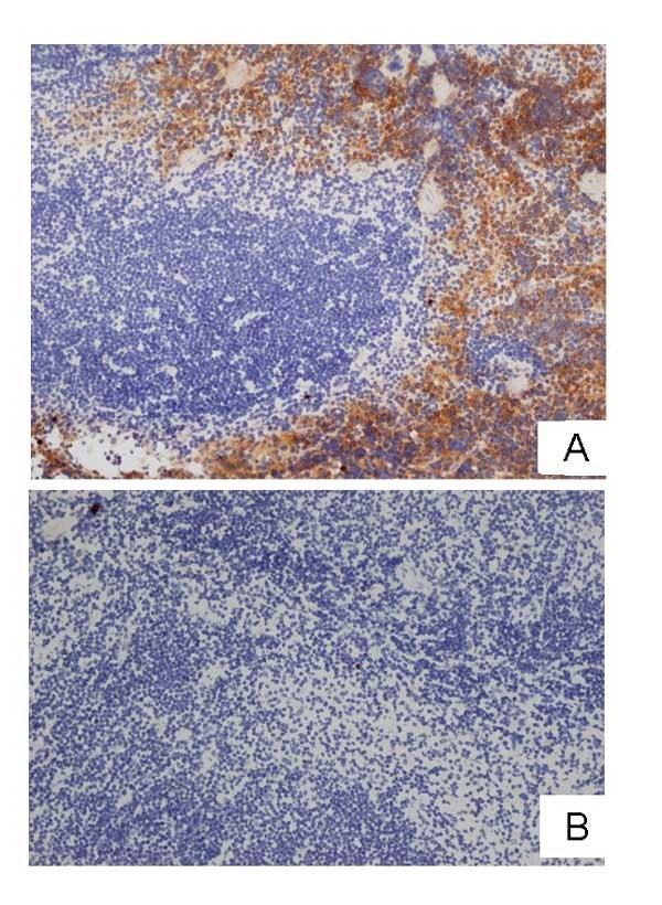 Anti Idiotypic Cl:A3-1 (F4/80) Antibody, clone AbD17867 gallery image 1
