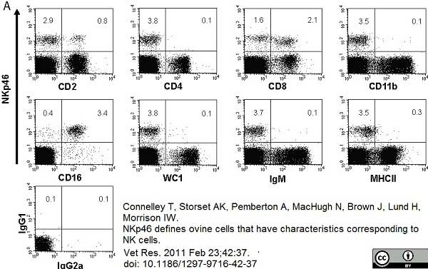 Anti Bovine CD11b Antibody, clone CC126 thumbnail image 5