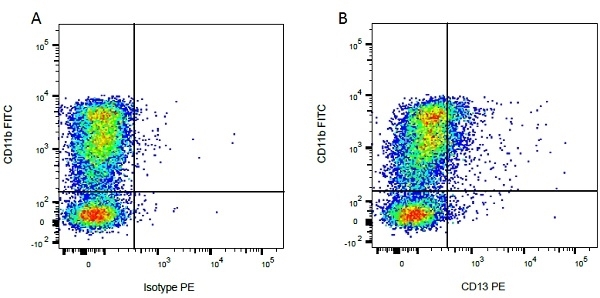 Anti Bovine CD13 Antibody, clone CC81 thumbnail image 2