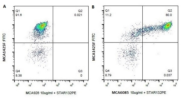 Anti Bovine CD14 Antibody, clone CAM36A gallery image 1