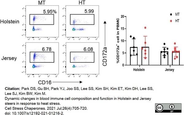 Anti Bovine CD172a Antibody, clone CC149 thumbnail image 10