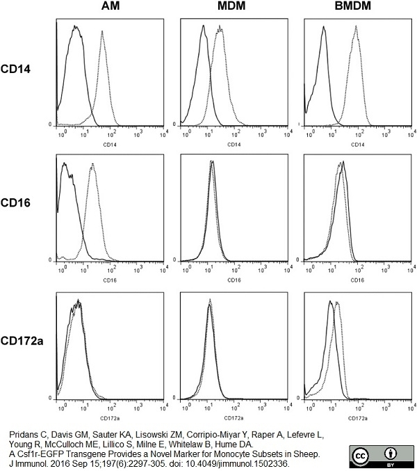 Anti Bovine CD172a Antibody, clone CC149 thumbnail image 2