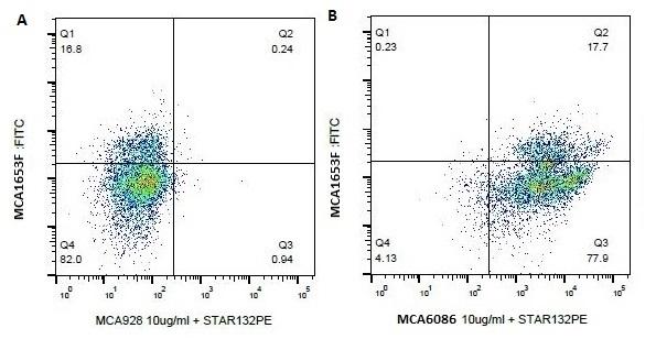Anti Bovine CD18 Antibody, clone BAQ30A gallery image 1
