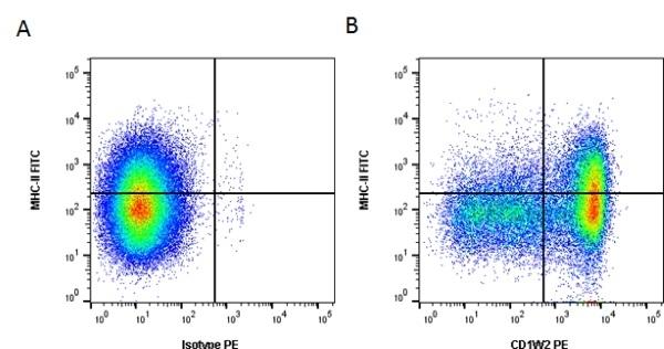 Anti Bovine CD1w2 Antibody, clone CC20 thumbnail image 1