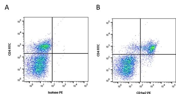 Anti Bovine CD1w2 Antibody, clone CC20 thumbnail image 2