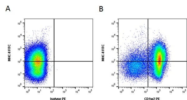 Anti Bovine CD1w2 Antibody, clone CC20 thumbnail image 4