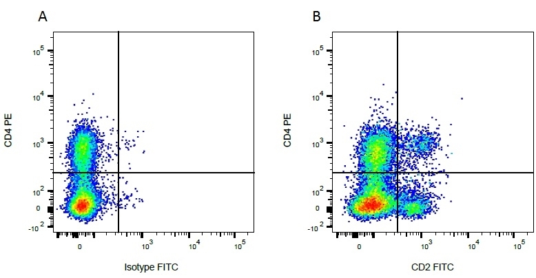 Anti Bovine CD2 Antibody, clone CC42 thumbnail image 3
