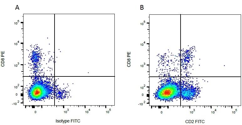 Anti Bovine CD2 Antibody, clone CC42 thumbnail image 5