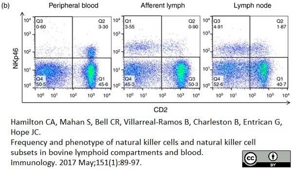 Anti Bovine CD2 Antibody, clone CC42 thumbnail image 8