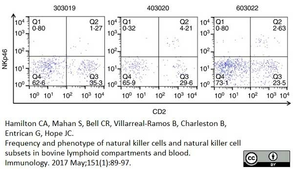 Anti Bovine CD2 Antibody, clone CC42 thumbnail image 9