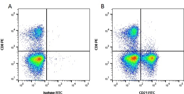 Anti Bovine CD21 Antibody, clone CC21 thumbnail image 2