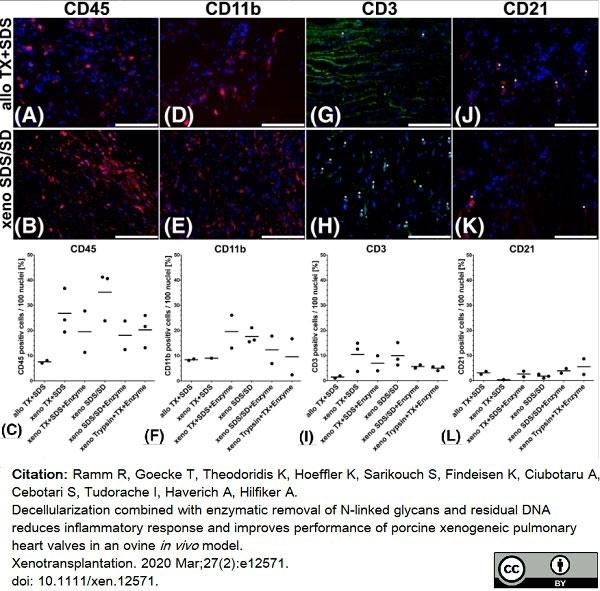 Anti Bovine CD21 Antibody, clone CC21 thumbnail image 3
