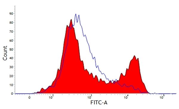 Anti Bovine CD21 Antibody, clone CC51 thumbnail image 1
