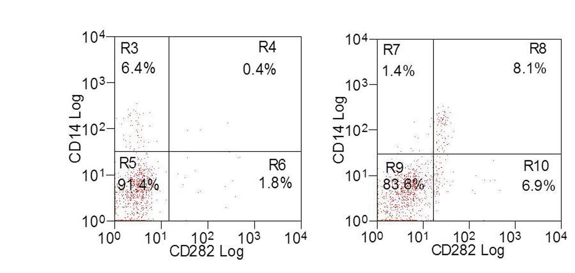 Anti Bovine CD282 Antibody, clone AbD12538 thumbnail image 1