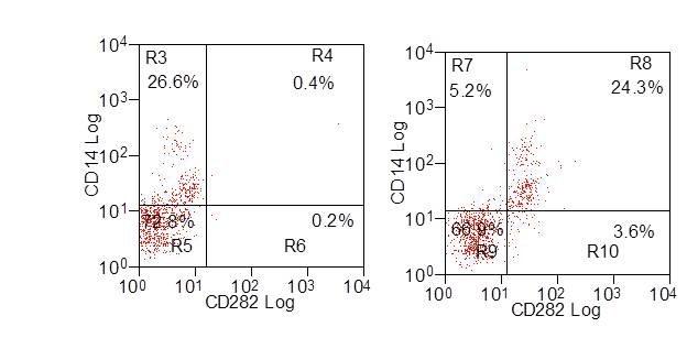Anti Bovine CD282 Antibody, clone AbD12538 thumbnail image 2