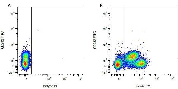 Anti Bovine CD32 Antibody, clone CCG36 thumbnail image 2