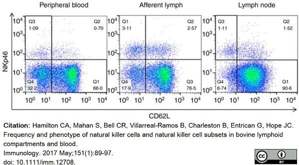 Anti Bovine CD335 Antibody, clone AKS1 thumbnail image 9