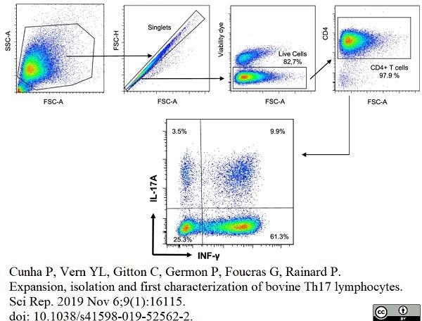 Anti Bovine CD4 Antibody, clone CC8 thumbnail image 14