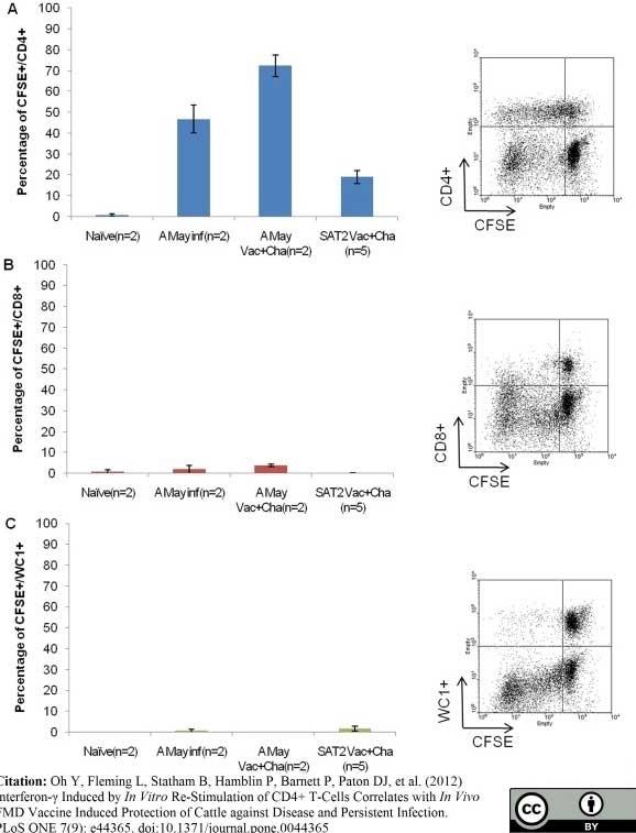 Anti Bovine CD4 Antibody, clone CC8 thumbnail image 2