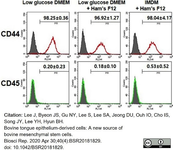 Anti Bovine CD44 Antibody, clone IL-A118 thumbnail image 6