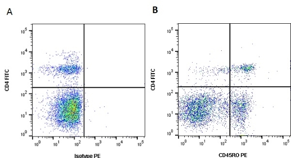 Anti Bovine CD45RO Antibody, clone IL-A116 thumbnail image 1