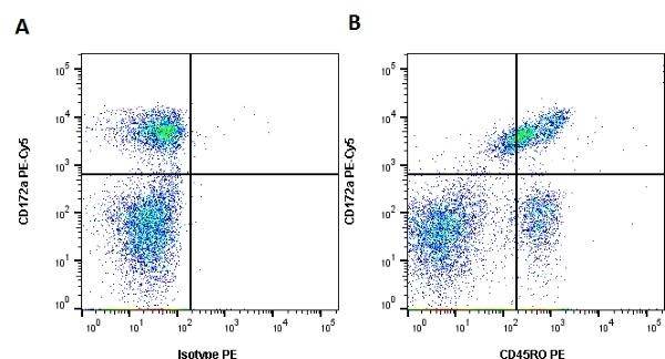 Anti Bovine CD45RO Antibody, clone IL-A116 thumbnail image 2