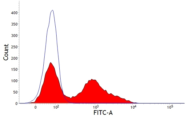 Anti Bovine CD5 Antibody, clone CC17 thumbnail image 2