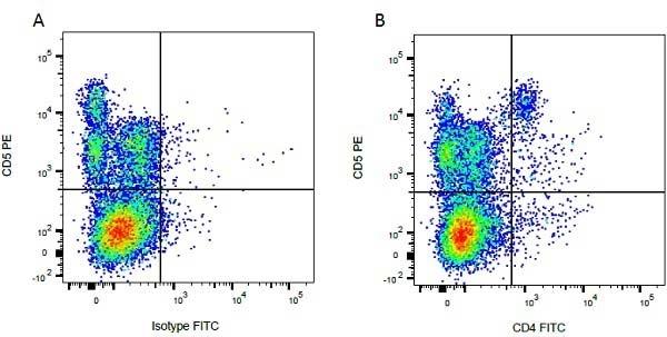 Anti Bovine CD5 Antibody, clone CC17 thumbnail image 3