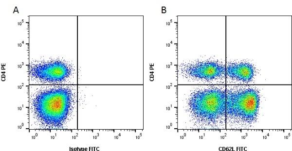 Anti Bovine CD62L Antibody, clone CC32 thumbnail image 1