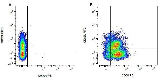 Anti Bovine CD62L Antibody, clone CC32 thumbnail image 3