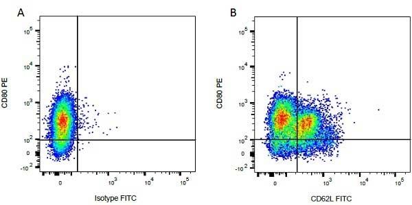 Anti Bovine CD62L Antibody, clone CC32 thumbnail image 4