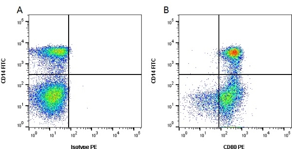 Anti Bovine CD80 Antibody, clone IL-A159 thumbnail image 1